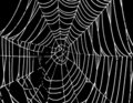 Vector Spider Web Background T Royalty Free Stock Photo