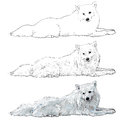 Vector spitz pom the of white slim dog mix from and pomeranian Stock Photos