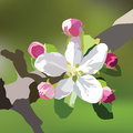 Vector Spring Apple or Cherry flowers blossom tree branch