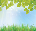 Vector of spring background with grass and leaves is my creative handdrawing you can use it for summer easter design etc made in Stock Images