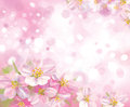 Vector of spring blossoming tree with pink backgro background is my creative handdrawing and you can use it for summer easter Stock Images