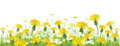 Vector spring flowers,  yellow chamomiles and dand Royalty Free Stock Photo