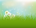Vector spring nature field with green grass white gerbera daisy flowers and water drops dew on green leaves bokeh effect Stock Images