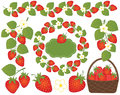 Vector Strawberries Set Included Basket, Wreath, Frame and Flowers. Vector Strawberry.