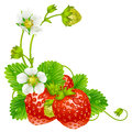 Vector strawberry frame isolated on background Royalty Free Stock Photo