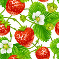 Vector strawberry seamless pattern on white backgr isolated background Stock Photos
