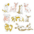 Vector stylish illustration. Funny collection of the different breeds.