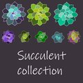 Vector succulent collection, set with white contours. Isolated