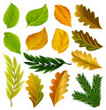 Vector summer and autumn leaves collection Stock Photography