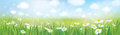Vector summer landscape, blue sky , meadow with chamomiles. Royalty Free Stock Photo