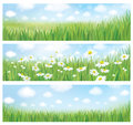 Vector summer landscapes, blue sky , meadow and chamomiles. Royalty Free Stock Photo