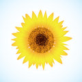 Vector sunflower Royalty Free Stock Photos