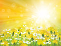 Vector sunshine background with yellow chamomiles is my creative handdrawing and you can use it for spring summer easter design Stock Photos