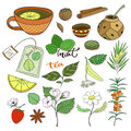 Vector tea collection. Herbal plants and elements for packaging design or menu decoration
