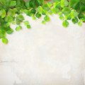Vector tree branch leaves plaster wall background season with branches green decorative white backdrop with subtle delicate grunge Stock Photography