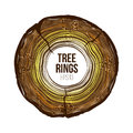 Vector tree rings slice with crack. Annual life texture. Woodgrain pattern Royalty Free Stock Photo