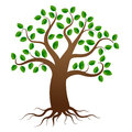 Vector tree with roots