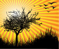 Vector tree with sunset Royalty Free Stock Image