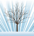 Vector_tree_winter Royalty Free Stock Photo
