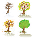 Vector trees of four seasons illustration a cartoon tree in Stock Photos