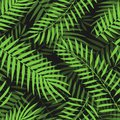 Vector Tropical palm leaves seamless pattern jungle floral ornamental background