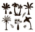 Vector tropical palm trees silhouettes. Jungle foliage black illustration. Hand drawn black exotic plants isolated on white