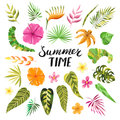 Vector tropical summer flowers and leaves