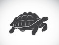 Vector of a turtle on white background. Reptile.