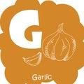 Vector vegetable alphabet for education. Illustration for kids. Letter G for Garlic