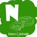 Vector vegetable alphabet for education. Illustration for kids. Letter N for Napa cabbage