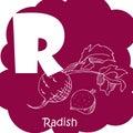Vector vegetable alphabet for education. Illustration for kids. Letter R for Radish.