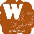 Vector vegetable alphabet for education. Illustration for kids. Letter W for White gourd