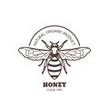 Vector vintage honey label design. Outline honeybee logo or emblem. Linear bee on white background.