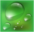 Vector water drops on green background Royalty Free Stock Photo