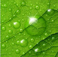 Vector water drops on green leaf Royalty Free Stock Photo