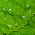 Vector water drops on green leaf macro background Royalty Free Stock Photo