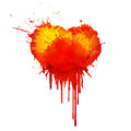 Vector  Watercolor blood heart illustration on white background. Royalty Free Stock Photo