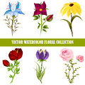Vector watercolor floral collection