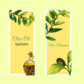 Vector watercolor hand drawn set of banners with olive branches and glass bottle.