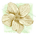Vector watercolor Hibiscus Royalty Free Stock Images