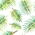 Vector watercolor palm tree leaf background