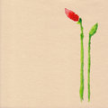 Vector watercolor poppy flower Royalty Free Stock Photo