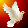 Vector white dove Stock Photo