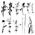 Vector wild plants silhouettes