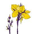 Vector yellow decorative Iris flower