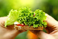 Vegan toast with fresh salad Royalty Free Stock Image