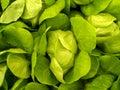 Vegetable  03 Stock Photos