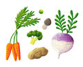 Vegetable acrylic illustration of fresh Stock Photos