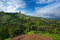 Vegetable crops on the hilly fields java indonesia Royalty Free Stock Images
