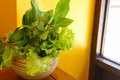 Vegetable for eating with vietnamese food in a bowl in a bowl mint leaves sweet basil Stock Images